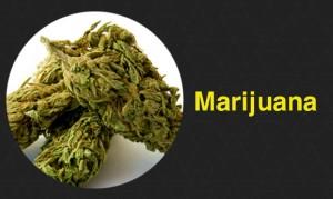 marijuana-dl