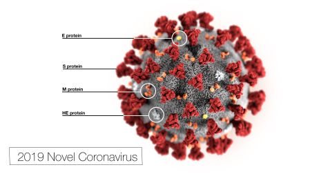 Illustration of 2019 Novel Coronavirus (2019-nCoV)
